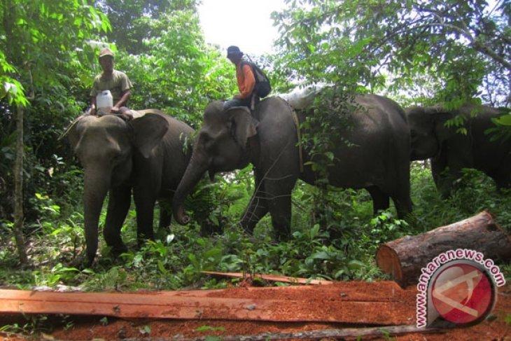 CRU Aceh halau gajah liar ganggu tanaman