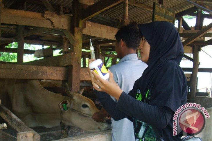 Malaysia Investasi Penggemukan Sapi Di Bengkulu