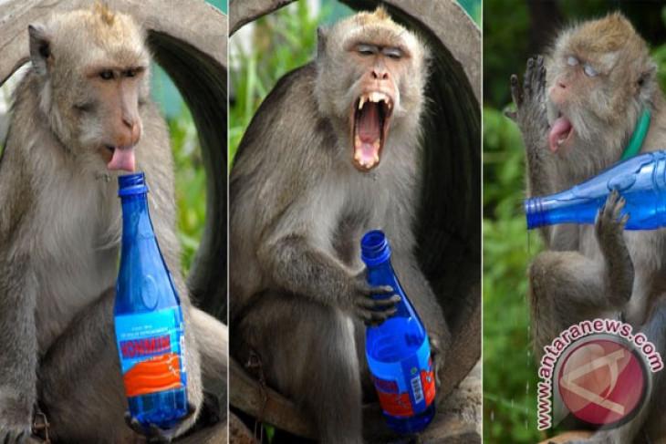 Ibu ini susui anak monyet