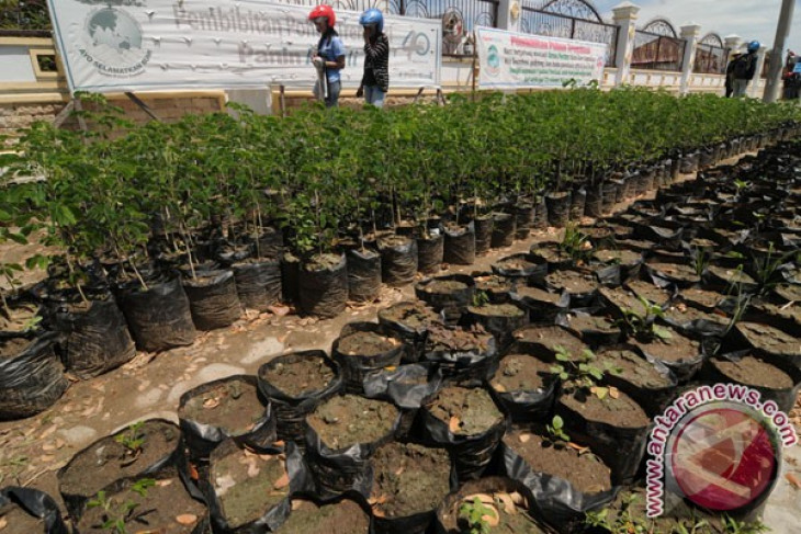 69 pohon di Surabaya identik dengan nama tempat