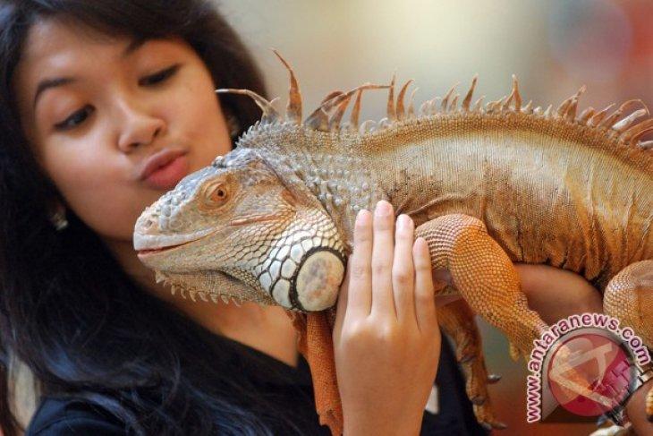 Pameran reptil