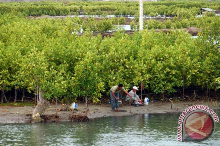 President Yudhoyono attends Bali mangrove planting event