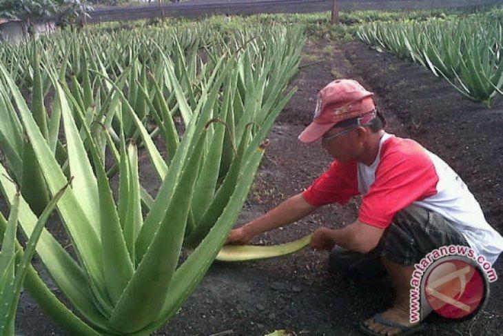 Pelaku usaha Pontianak  persiapkan produk unggulan sambut Pesparawi