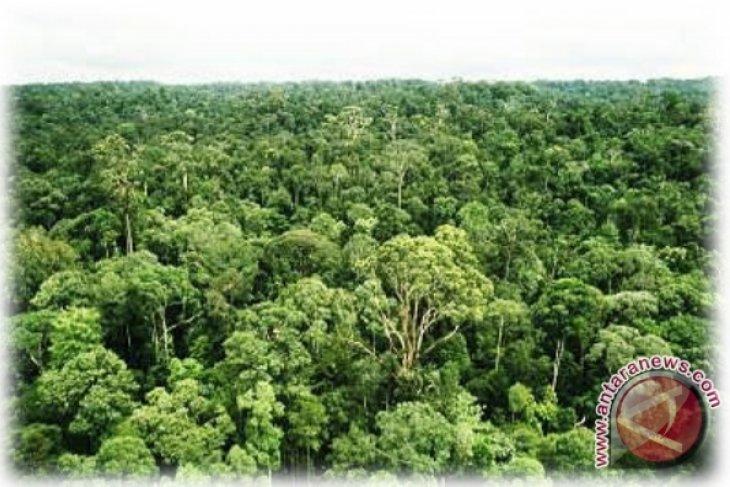 Memberikan hak masyarakat hutan memerangi perubahan iklim