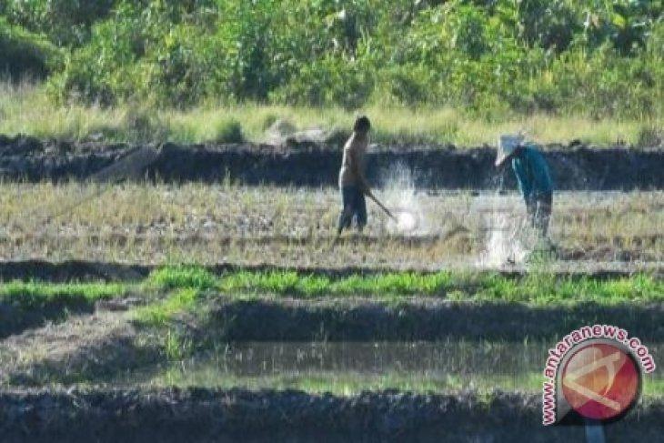 Gubernur target Kalbar swasembada beras tahun depan
