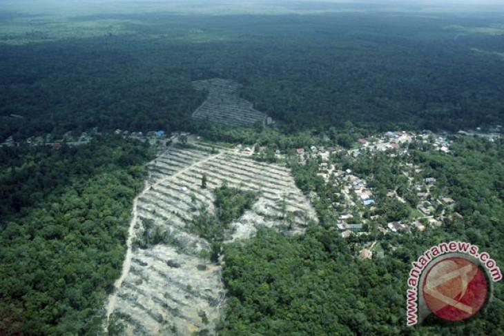 Memperpanjang moratorium hutan, memperpanjang kehidupan