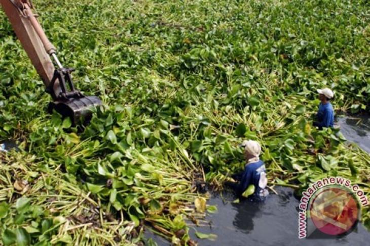 Enceng Gondok tutupi 70 persen Danau Limboto