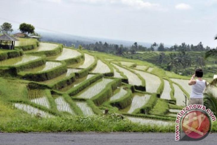 Alih fungsi lahan pertanian ancam ketahanan pangan