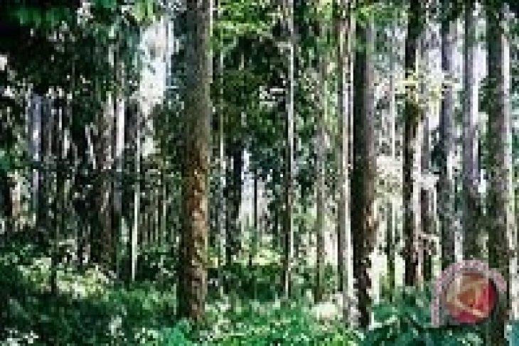 Artikel - Hutan di Tengah Dana Hibah yang Menggiurkan