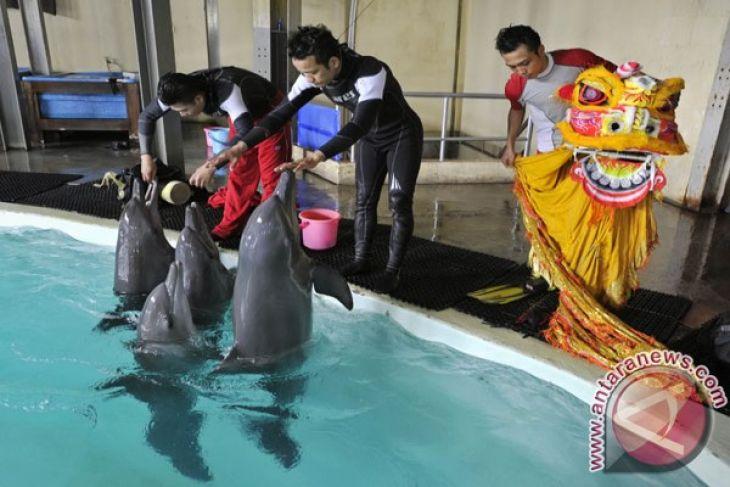 Perusahaan sirkus bantah eksploitasi hewan