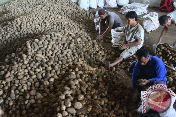 Dirjen hortikultura bantu pengembangan kentang Solok Selatan