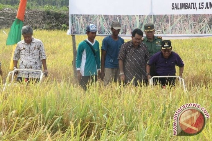PT NAM Buktikan Food Estate Jalan Terus