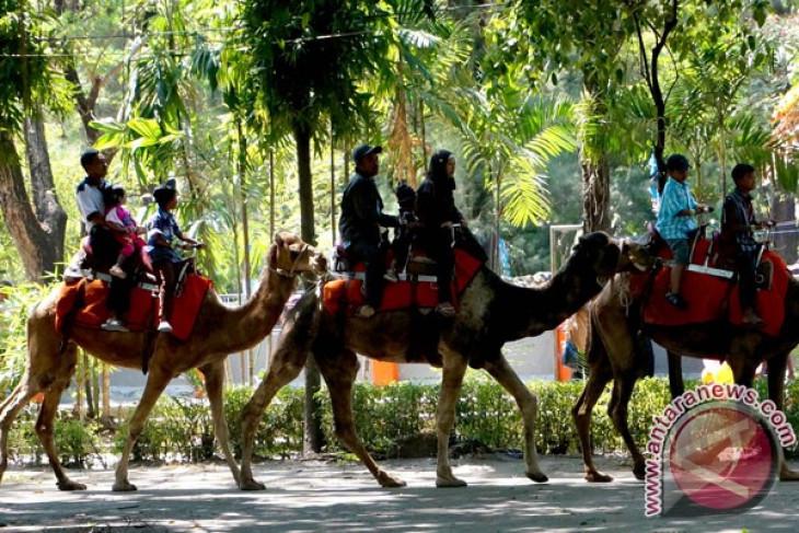 Surabaya Zoo improving: Mayor