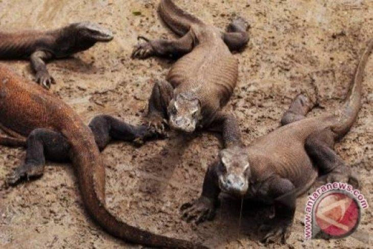 Pendapatan Wisata Pulau Komodo Naik