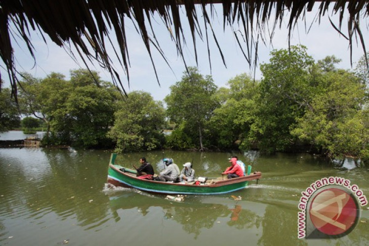 Tangerang budidaya mangrove dukung destinasi wisata bahari