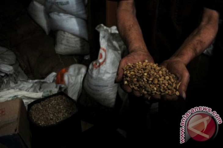Taiwan borong kopi Indonesia 11,5 juta dolar Amerika Serikat
