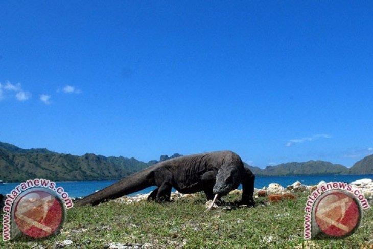 Menteri LHK dukung penutupan Pulau Komodo
