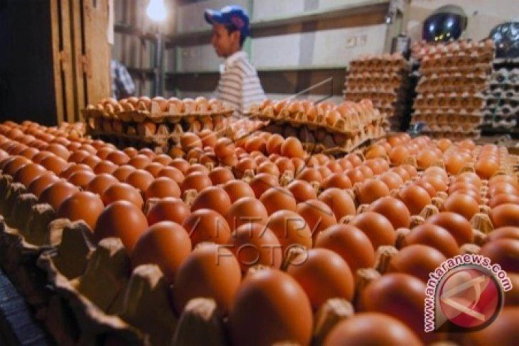 Harga telur ayam ras di  Ambon bervariasi