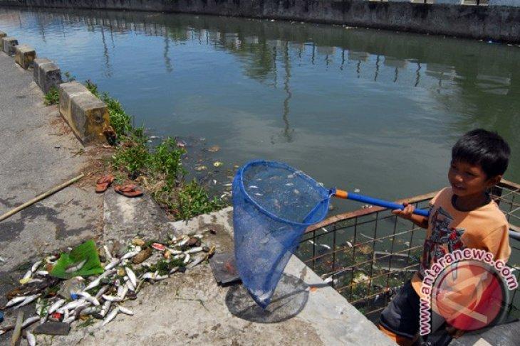 Ribuan Ikan Mati di Sungai Souraya Subulussalam