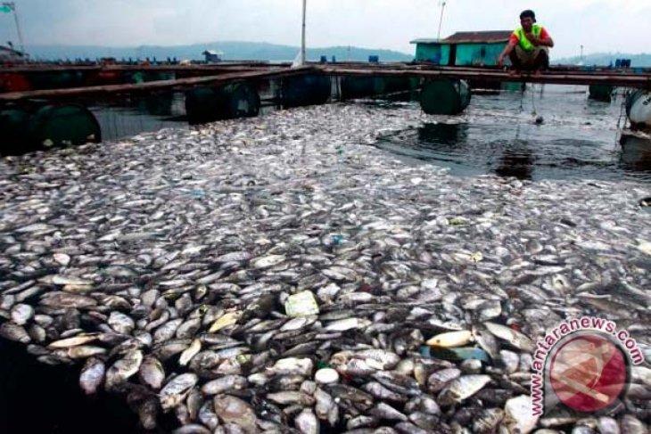 Ribuan Ikan di BBIL Pangkalpinang Mati