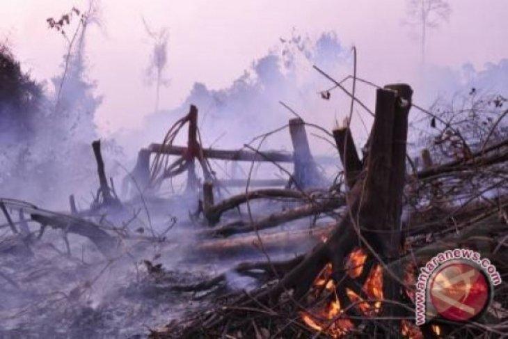 BMKG : 813 Titik Panas Tersebar di Sumatera