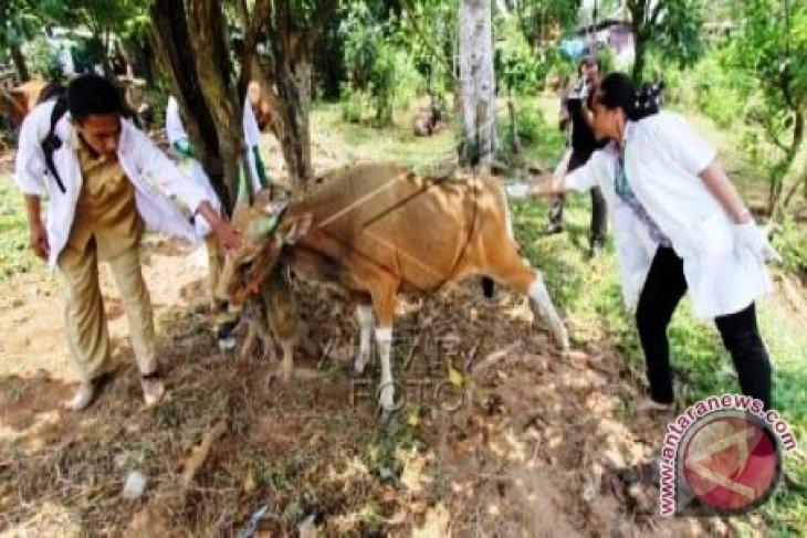 Distan Maluku luncurkan aplikasi kesehatan hewan