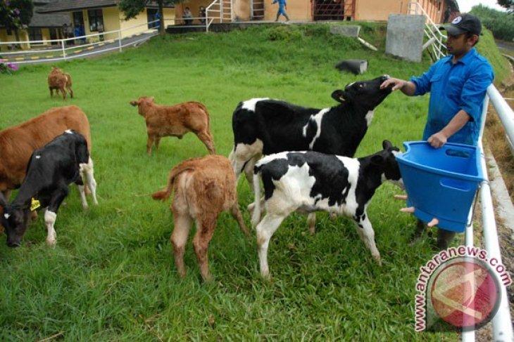 Kementan sosialisasikan paket teknologi pembibitan sapi