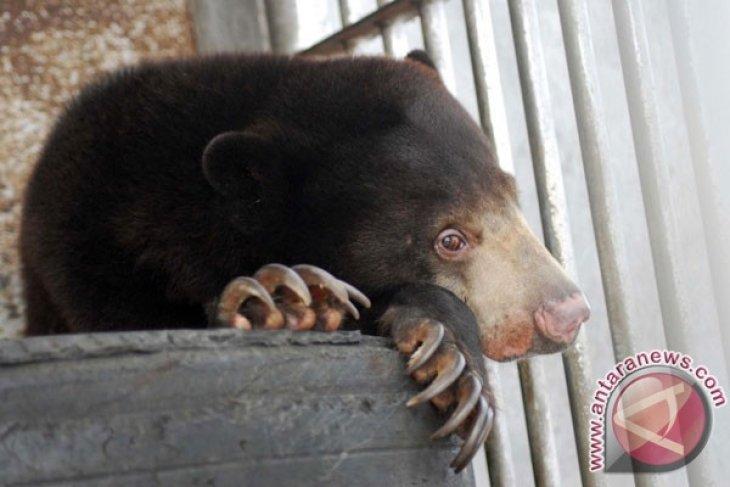 Pembunuh empat ekor beruang madu ditangkap