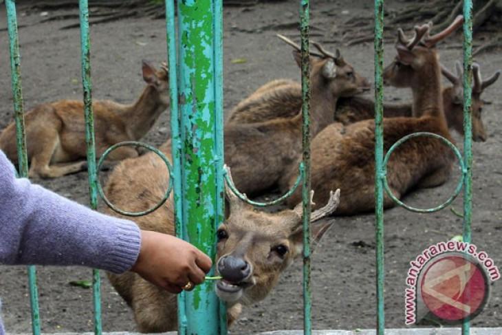 Taman Nasional Komodo investigasi foto kapal berisi puluhan rusa mati