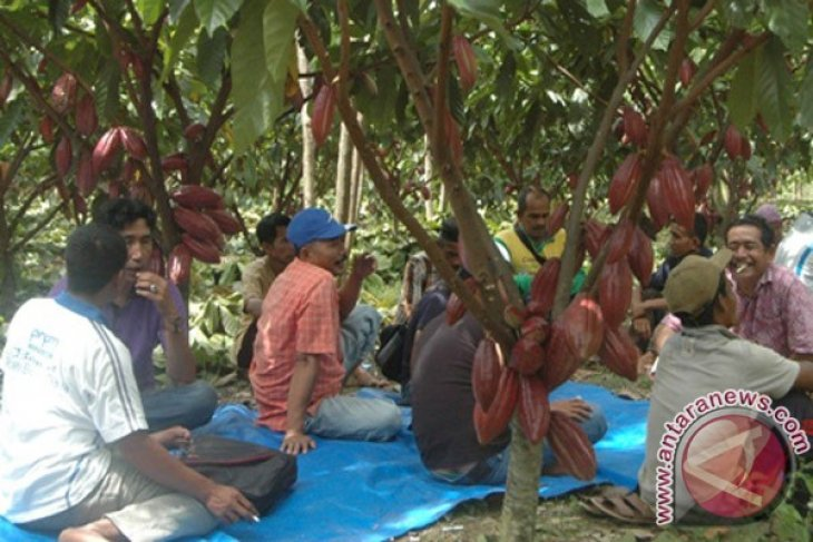 BPTP Aceh Latih Petani Kakao di Abdya