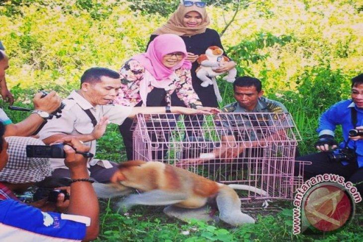 Again, the SBI Released Bekantan to Wildlife