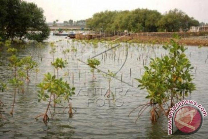 Waduh, Penyusutan Hutan Mangrove Setiap Tahun 1.000 Hektar