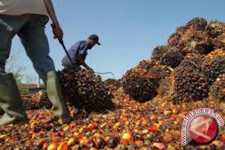 Harga CPO  Jambi turun Rp319 per kilogram