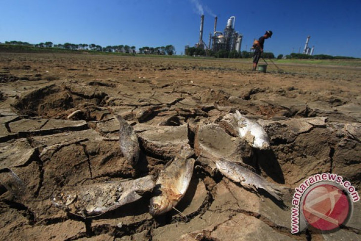 Dua hektare sawah di Kota Sukabumi kekeringan