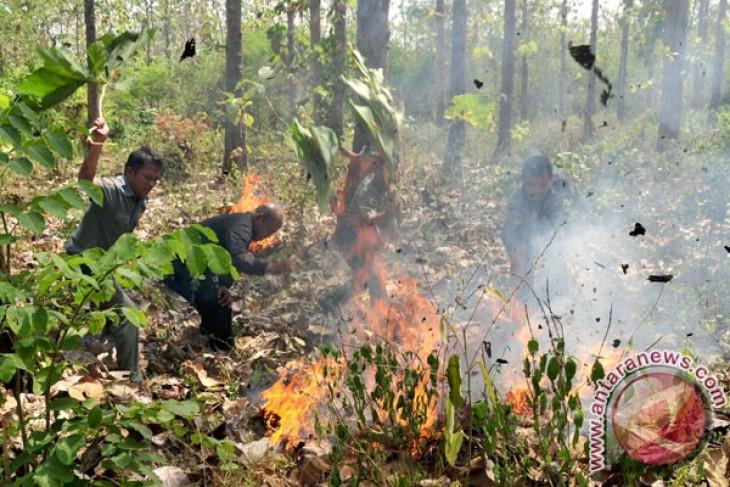 Hutan jati milik Perhutani di Ponorogo terbakar