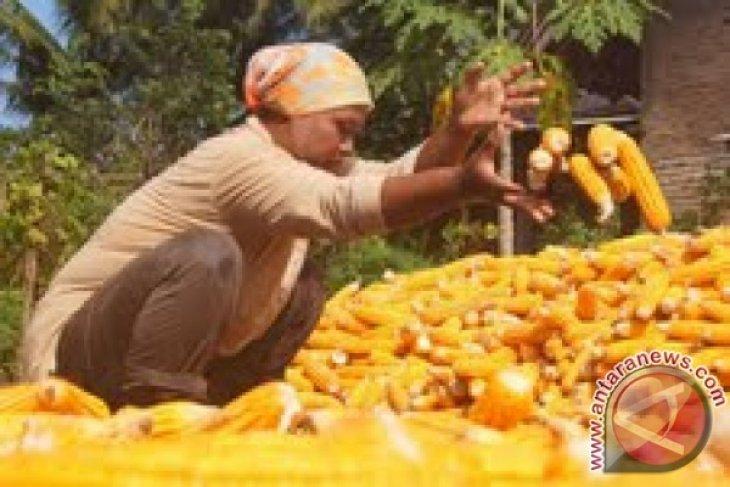 Prihatin, 22,4 juta orang di Tanduk Afrika rawan pangan