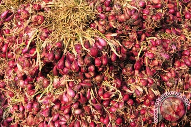Petani Temanggung tolak bawang merah impor