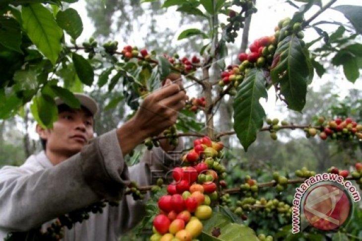 Distan: rehabilitasi tanaman kopi dari berbagai sumber