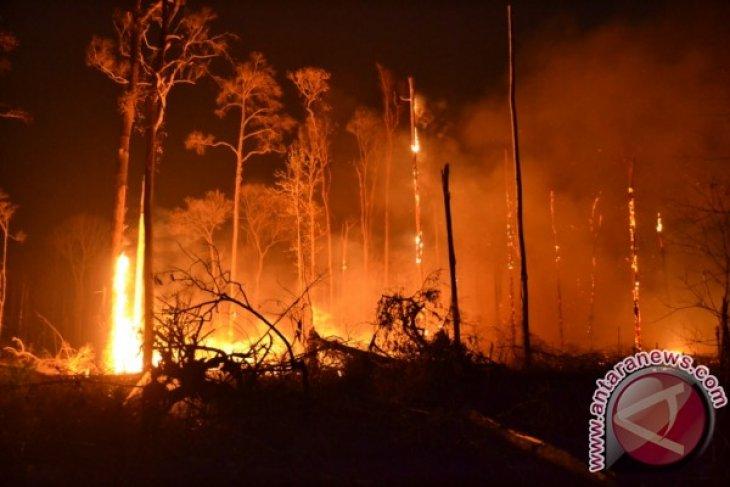 Satpol PP-Damkar sebut kebakaran hutan di Bangka Tengah ada unsur kesengajaan