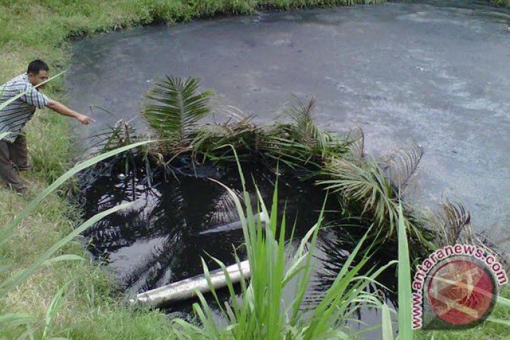 Petani Mukomuko manfaatkan limbah sebagai pupuk sayuran