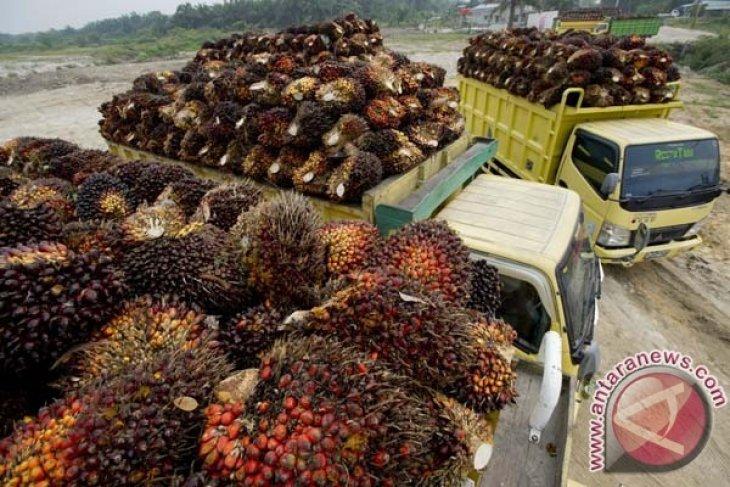 GAPKI: Industri Sawit 2016 akan Tumbuh Positif