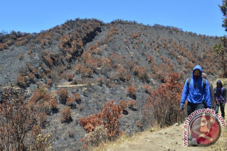 Dead Toll in Mount Law Forest Fire up to 7 Mountain Climbers