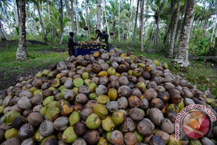 Maluku Utara berupaya aktifkan ekspor kopra