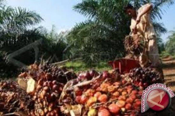 CPO price in Jambi slides Rp161 per kilogram