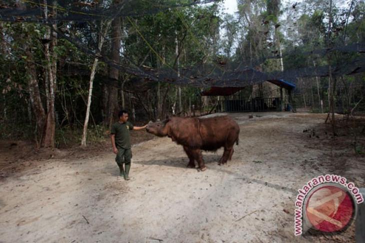 Badak sumatera jadi logo Festival Way Kambas