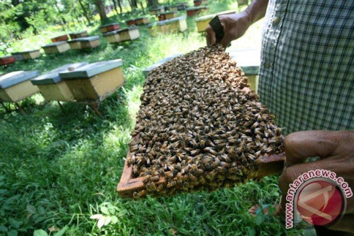 Pemelihara lebah yang bercita-cita tinggi berjuang hidupkan kejayaan Mesir