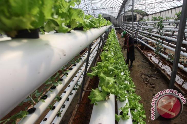 Pemkab Tangerang uji coba program pertanian perkotaan
