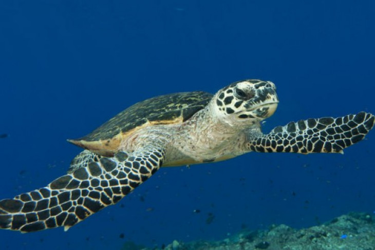Abu Dhabi releases successfully 14 rehabilitated sea turtles