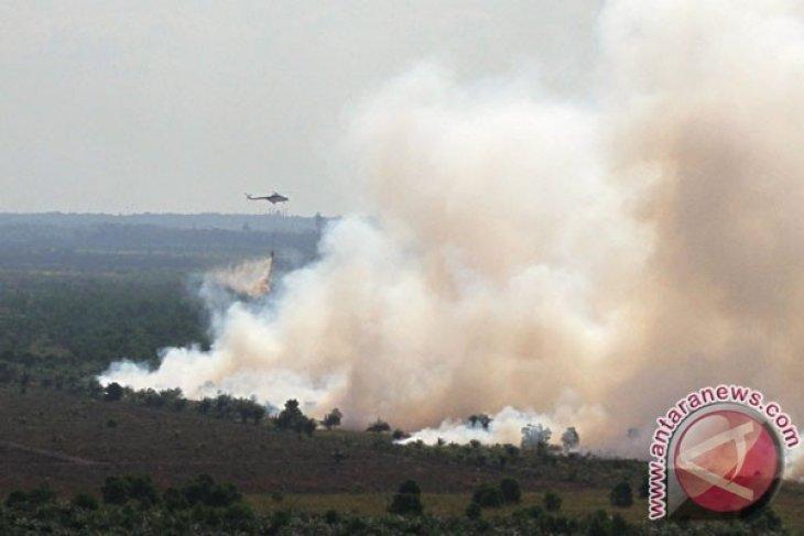 Walhi: SP3 berulang tunjukkan kejahatan lingkungan berlanjut