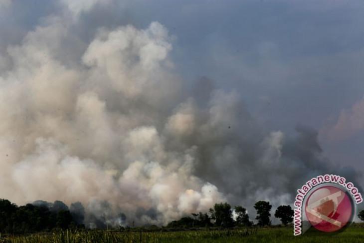 BNPB fokus pada pencegahan kebakaran hutan Sumatera Selatan